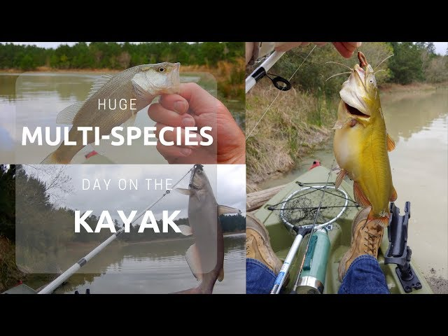Fattest Bullhead Ever! Huge Multi-Species Day on the Kayak! | Lake Holcomb Crappie, Bass and Catfish