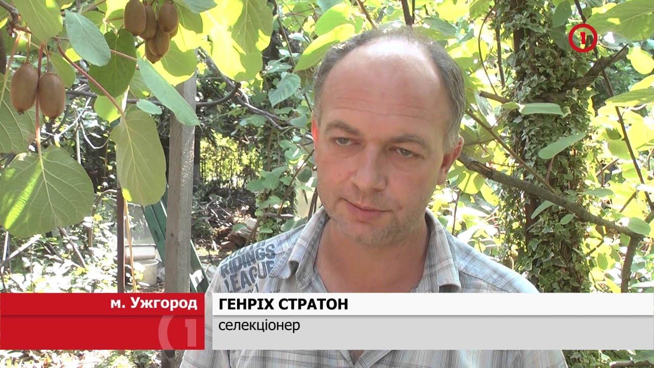 Герман Олег Николаевич Земляника Гребеники - YouTube
