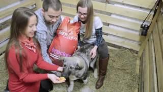 видео Благотворительный фестиваль в помощь бездомным животным «Хочу домой. БАНО «Эко»