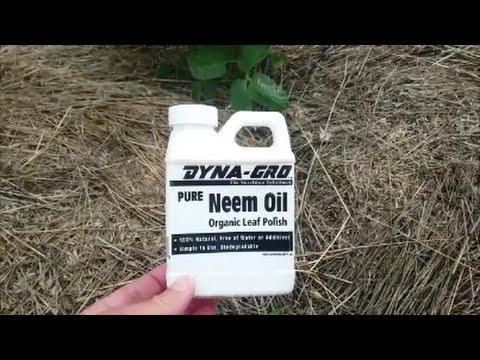 How Use Neem Oil In The Garden