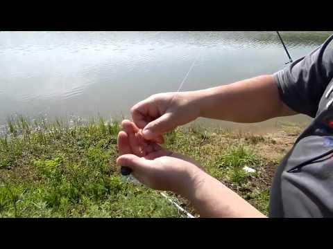 ловля толстолобика на дону на планктон
