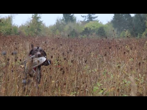 Young Hunters Enjoy Free Pheasant Hunting