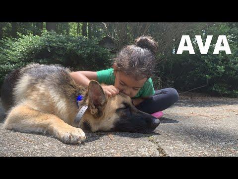 "german-shepherd-""ava""-|-dog-reactivity-case-|-awesome-transformation-|-amazing-obedience"