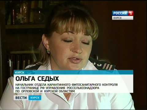 В Курской области поймали американскую белую бабочку