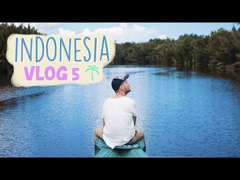 orangutanes-en-libertad.-borneo- -indonesia-vlog-5