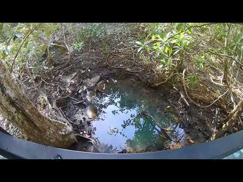 Australia - Cape Tribulation - Marrja Botanical Walk - Sept 2017