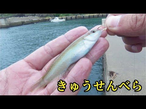 堤防で小ベラの泳がせ釣りをしてみたら・・・