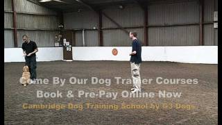 G3 Dogs | Cambridge Dog Training School