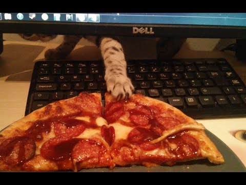 Thumbnail for Cat Video Cat Steals Pizza!