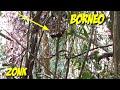 Mikat Burung Cililinauto Belum Beruntung  Mp3 - Mp4 Download