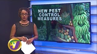 TVJ News: New Pest Control Measures - January 23 2020