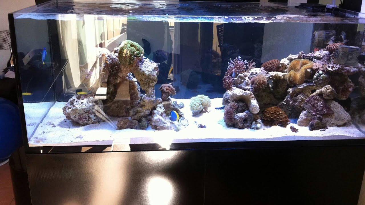 aquarium eau de mer recifal elos 160xl de jbm06