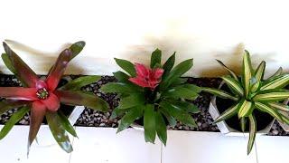 Plantas Que Deixam O Ambiente Mais Bonito