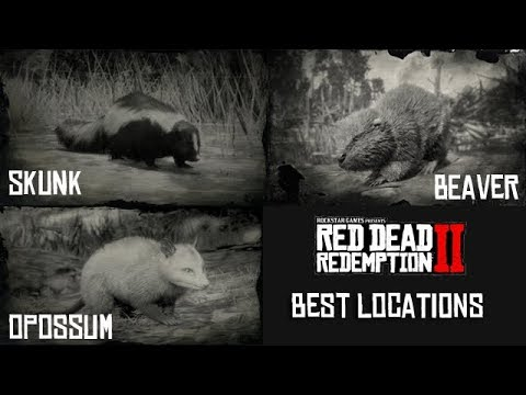 Red Dead Redemption 2 - Best Place To Find Opossum, Skunks And Beavers