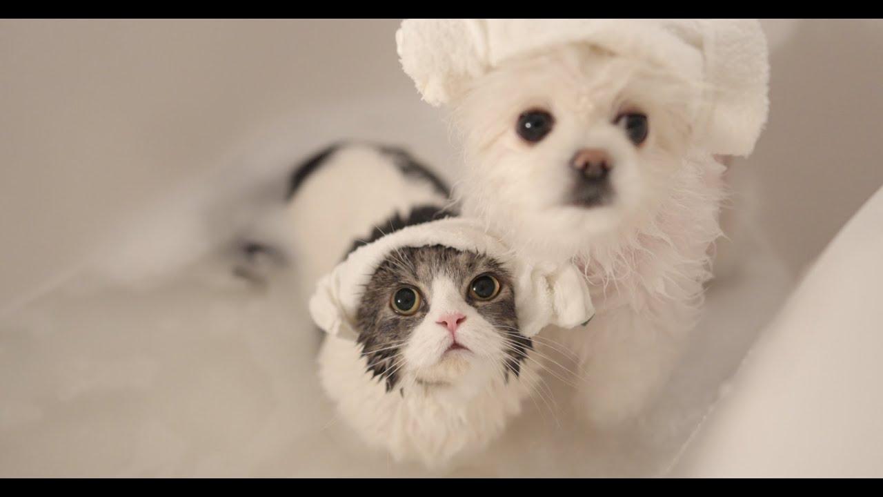 고양이가 목욕을 즐기면 기적이라던데 .. (petlog 47)