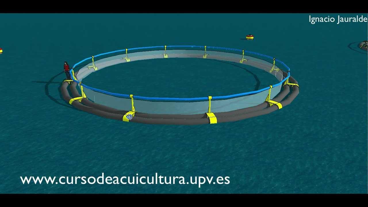 Jaulas marinas youtube for Jaulas para cria de peces
