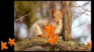 Autumn Leaves - Celtic Music for Relax and Meditation (part 2)