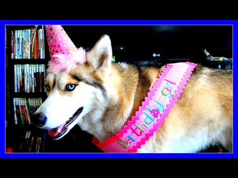 HAPPY BIRTHDAY SHELBY THE HUSKY 9th Birthday