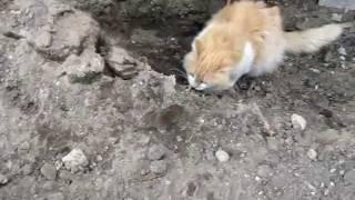кошки мышки / mouse hunt