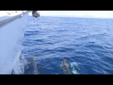 Dolphins Sailing Holidays Greece ⁓ The Sailing Nations