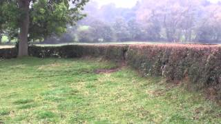 Cheshire Drag Hunt Hedge Hopping