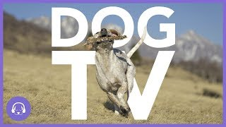 Dog TV: 7 Hours of ActionPacked Dog Entertainment! (NEW)