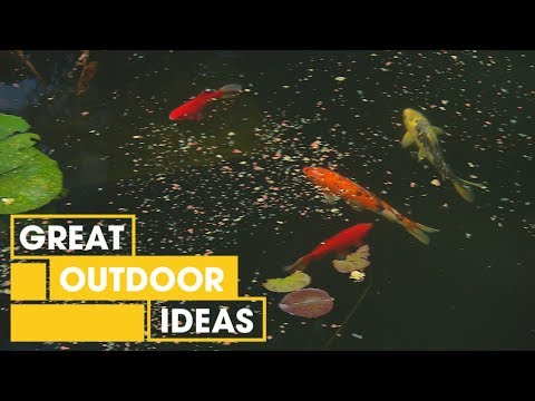How To Transform Your Pool Into A Pond | Outdoor | Great Home Ideas
