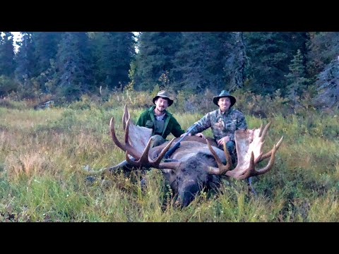 Giant Alaskan Moose – The Hunt And Experience