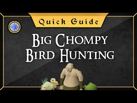 [Quick Guide] The Big Chompy Bird Hunting
