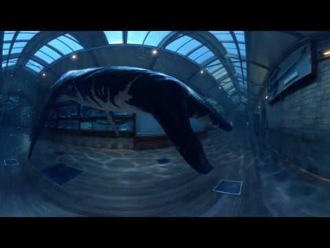 Rhomaleosaurus: Zum Leben Erweckt – Durch Virtual Reality
