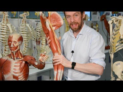 Nerves of the upper limb (anatomy)