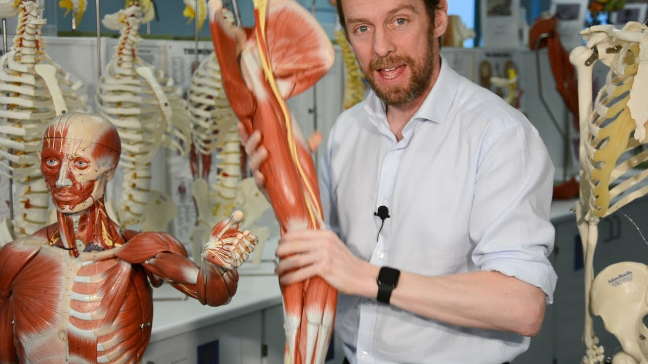 Nerves of the upper limb (anatomy) - YouTube