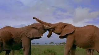 Discovery  Дикая природа Африки  Королевство слонов  Документальный фильм