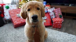 Puppy's First Christmas (Dexter The Puppy)