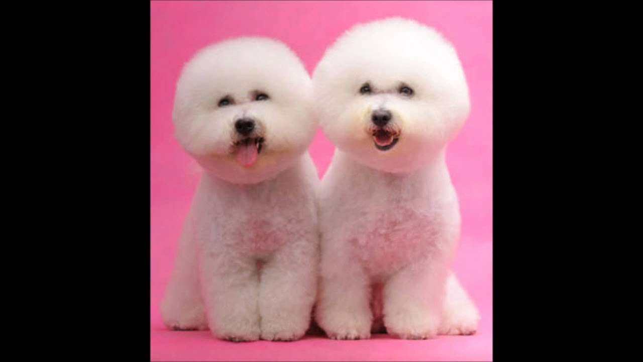 Best Cutest Dog Names