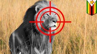 """สลด นักล่ากระเป๋าตุง ยิงลูกของสิงโต """"เซซิล"""" ตาย"""