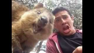 Квокка самый прикольный улыбчивый зверек на свете Самое милое животное Кенгуру