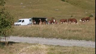 la traite des vaches en montagne avec machine a traire ep 1