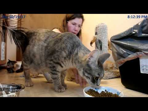 Jolene & the Country Music Kittens - 10/19 weigh-in and visit