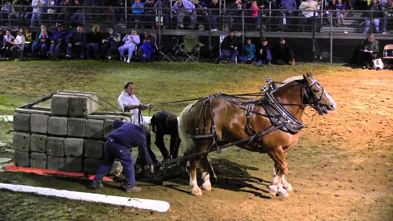 Download Draft Horse Pull 2013 Deerfield Fair NH Pulling Video 53