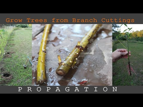 Grow Trees from Branch Cuttings - Propagation for Free Screen Wall