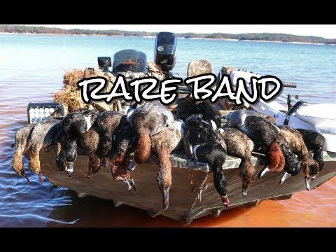 RARE Banded Duck!! Georgia Duck Hunt 2017