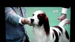 Silly Westminster Dog Show Announcer