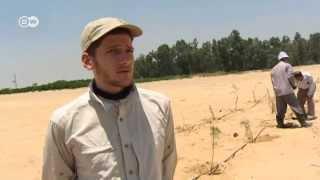 Ägypten: Der Wunderwald in der Wüste | Global 3000