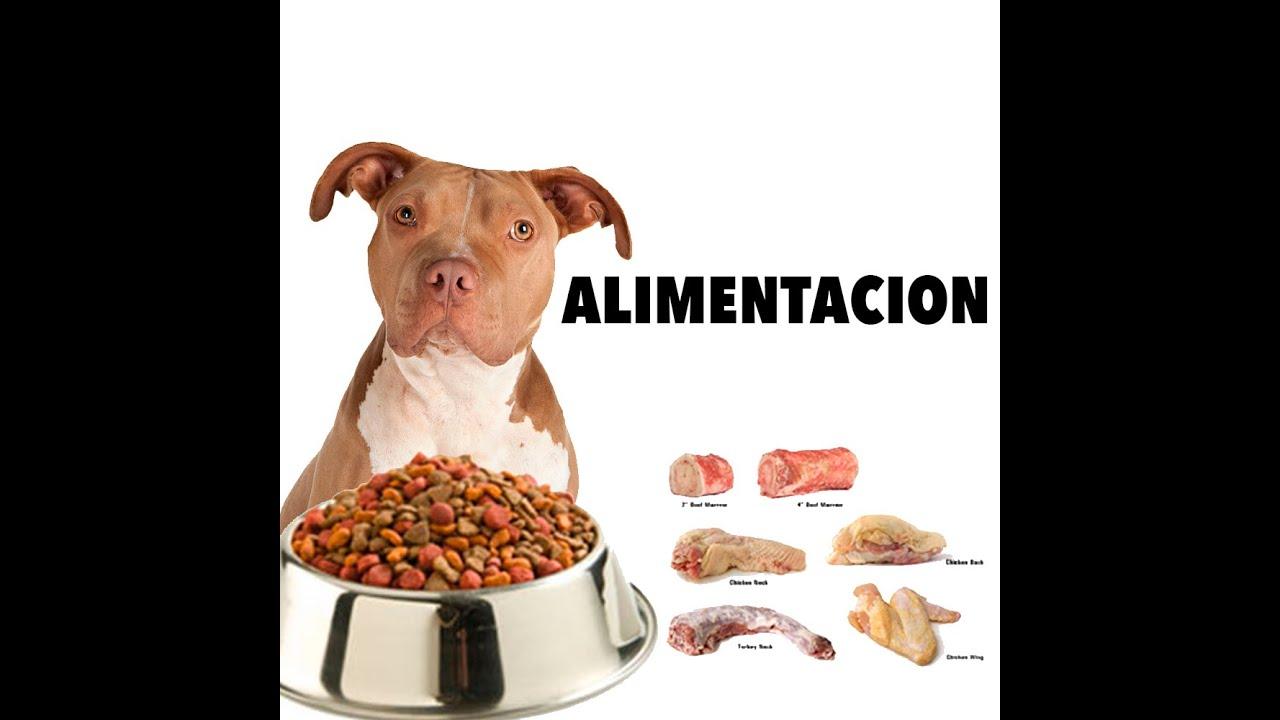 Alimentacion pitbull youtube - Comida para cachorros de un mes ...