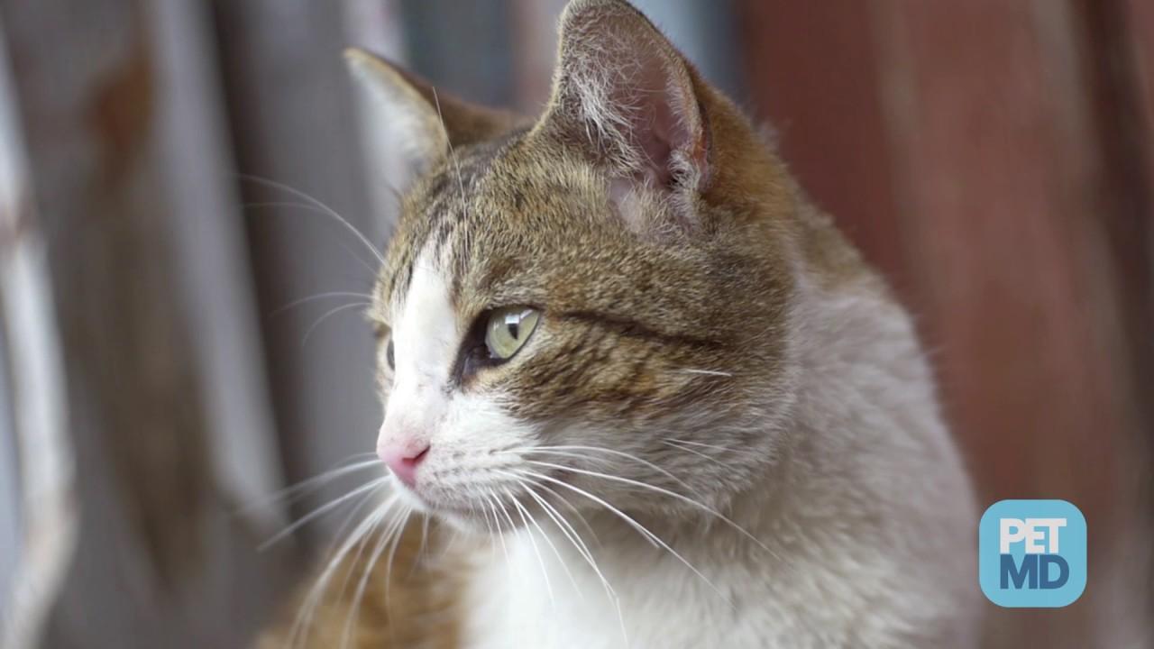 Cat Wound Care
