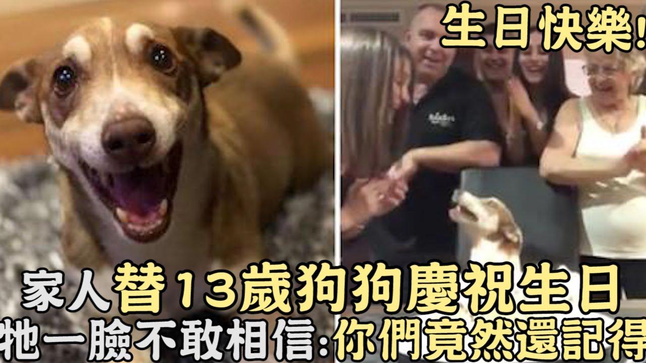 生日快樂!家人替13歲狗狗慶祝生日,牠超開心一臉不敢相信:你們竟然還記得!