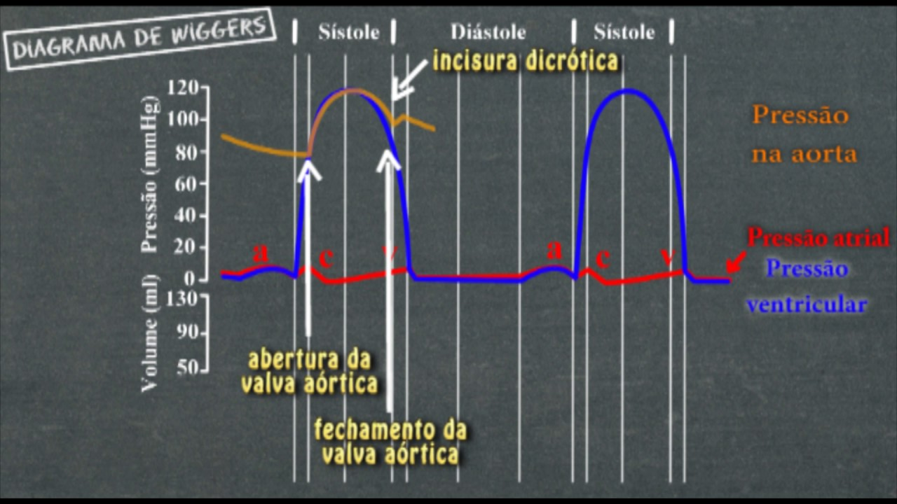 Fisiologia cardíaca Diagrama de Wiggers - YouTube