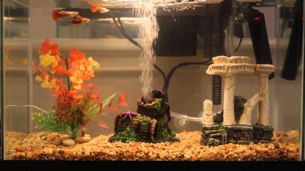 Cara Mudah Membuat Pompa Air Aquarium Tanpa Suara Bising
