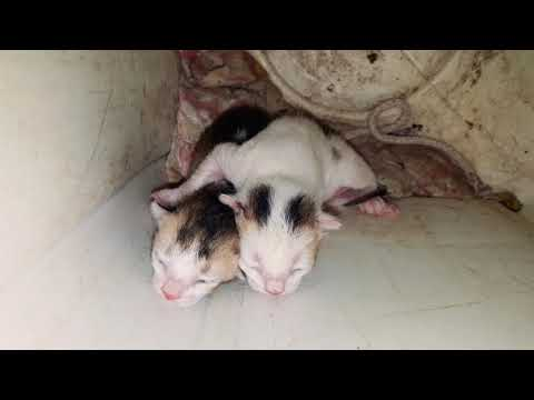 Cute new born kittens meowing